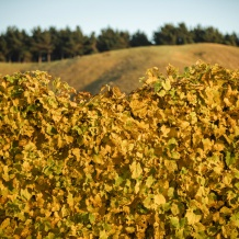 The autumnal change at the Waihuka source block