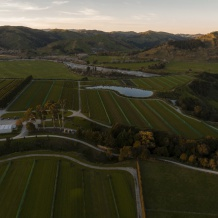 Whatatutu grapevine field nursery at dusk